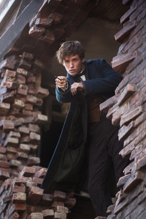 Fantastic Beasts and Where to Find Them - Image - Image 2