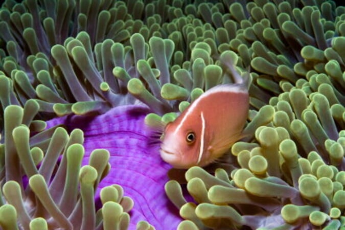 Under the Sea - Image - Image 12