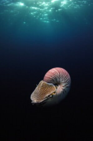 Under the Sea - Image - Image 7